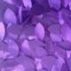 Gatsby Purple