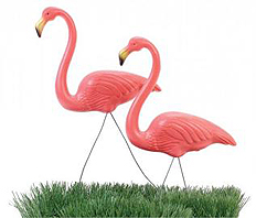 Gallery image for Flamingos