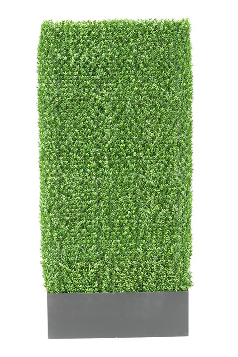 Gallery image for Boxwood Hedge